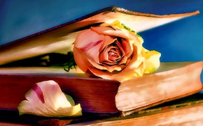 Картинка Роза, Рисунок, Книга, Арт, Art, Rose