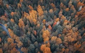 Обои река, осень, лес