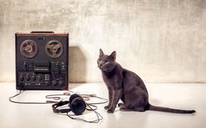 Обои кот, лапы, меломан, wallpaper., боке, катушечный, зеленые глаза, бобинный, магнитофон, пленка наушники, котяра, порода русская ...