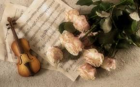 Картинка ноты, розы, Музыка, Скрипка, Классика, Инструмент