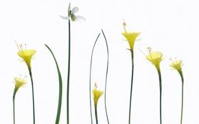 Картинка природа, весна, лепестки, стебель
