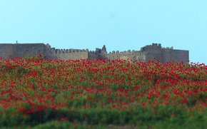 Картинка flowers, castle, poppies