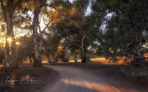 Картинка дорога, свет, деревья