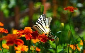 Картинка цветы, Макро, Бабочка, Flowers, Macro, Butterfly