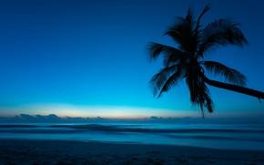 Обои море, пляж, лето, ночь, тропики, пальма, Природа