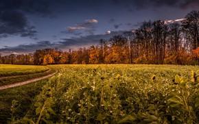 Картинка осень, пейзаж, утро
