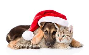Обои кошка, собака, Новый Год, Рождество, Christmas, dog, 2018, Merry Christmas, Xmas, funny, cute, decoration, santa ...