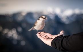 Картинка природа, птица, рука