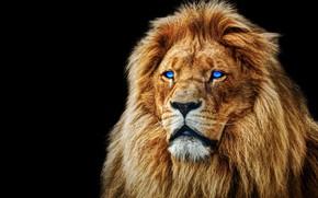 Картинка глаза, морда, лев, грива