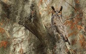 Картинка дерево, сова, оперение