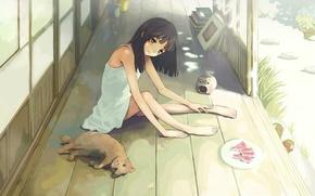 Картинка лето, книги, арбуз, тарелка, девочка, веранда, рыжий котенок