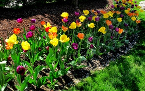 Картинка Весна, Тюльпаны, Spring, Colors, Tulips