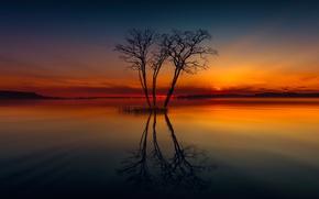Картинка озеро, отражение, дерево
