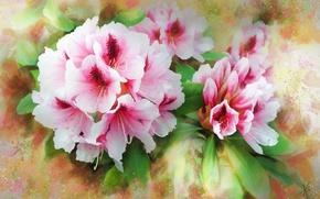 Картинка цветы, розовая, рисунок, графика, обработка, букет, картина, лепестки, арт, ярко, живопись, легко, рисованные, мазки, композиция, …