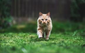 Картинка кошка, природа, фон