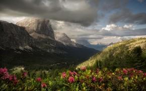 Картинка облака, цветы, горы, леса
