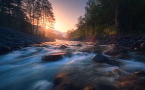 Картинка вода, солнце, деревья, река, камни, поток