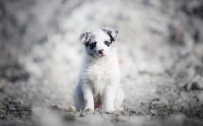 Картинка собака, щенок, Nami
