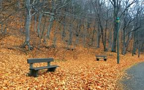 Картинка осень, город, парк, скамья