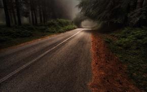 Картинка дорога, лес, деревья, природа, дымка