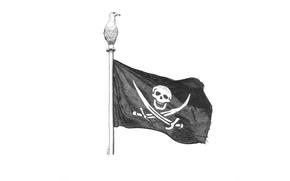 Обои птица, реет, пиратский, флаг