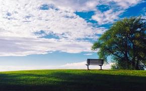 Картинка зелень, лето, небо, трава, солнце, облака, скамейка, дерево, газон, лужайка
