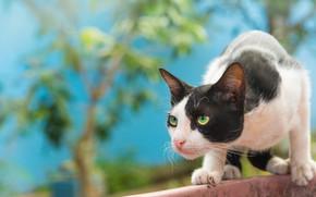 Картинка кошка, кот, охота, наблюдение