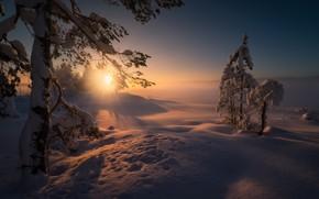 Картинка зима, солнце, лучи, снег, деревья, пейзаж, закат, природа, дом, вечер, ели, Норвегия