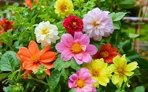 Картинка Цветы, Flowers, Colors