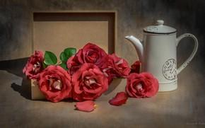 Картинка коробка, розы, чайник