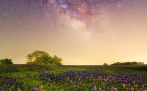 Картинка цветы, луг, Млечный путь, галактика, Техас, люпин, звёздное небо, кастиллея