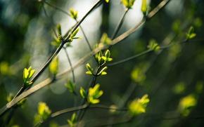 Картинка Макро, Природа, Весна, Ветки, Почки