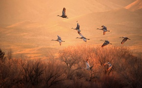 Картинка свет, деревья, птицы, полёт, журавли