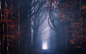 Картинка дорога, осень, свет, деревья, листва, дымка