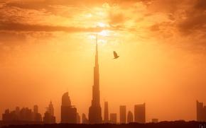 Картинка свет, город, птица, утро, Дубай, ОАЭ