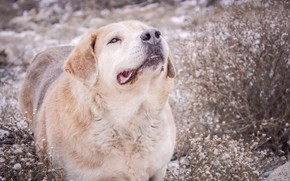 Картинка печаль, собака, холодно, колючка, нос по ветру