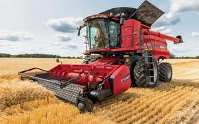 Обои трактор, 8240, Case IH, техника, поле, Axial-Flow, сено