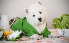 Картинка цветок, собака, кувшинка, костюм, Щенок, Малыш