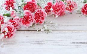Картинка цветы, фон, веточки, Гвоздики