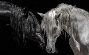 Обои цвет, кони, фон, природа
