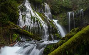 Картинка вода, деревья, водопад, мох, поток