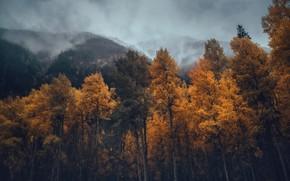Картинка осень, лес, горы, туман
