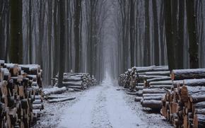 Картинка зима, лес, дрова