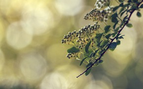 Обои весна, цветы, ветка, макро, боке