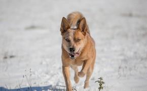 Картинка зима, взгляд, собака