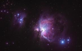 Картинка звезды, туманность, Orion Nebula