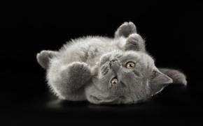 Картинка котенок, серый, милый