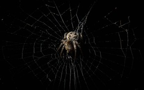 Картинка макро, паутина, паук