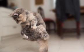Картинка кошка, прыжок, мех