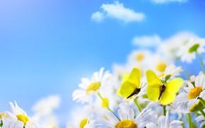 Картинка облака, бабочки, ромашки